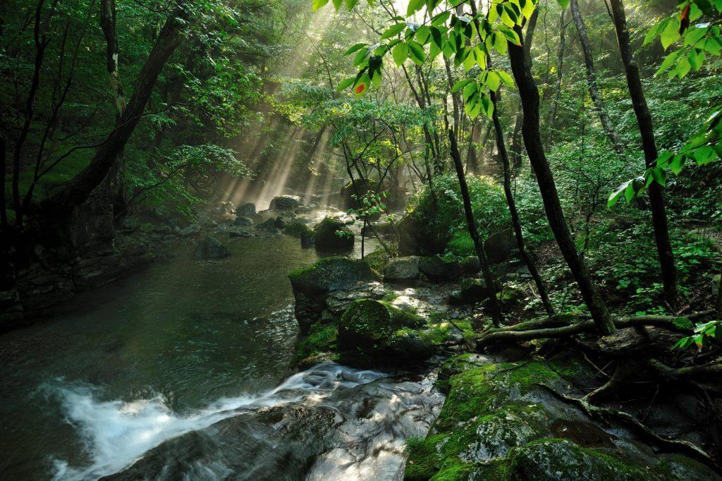 栃木県矢板市の公園「栃木県県民の森」関連記事を表示最近の投稿各地の観光情報広告